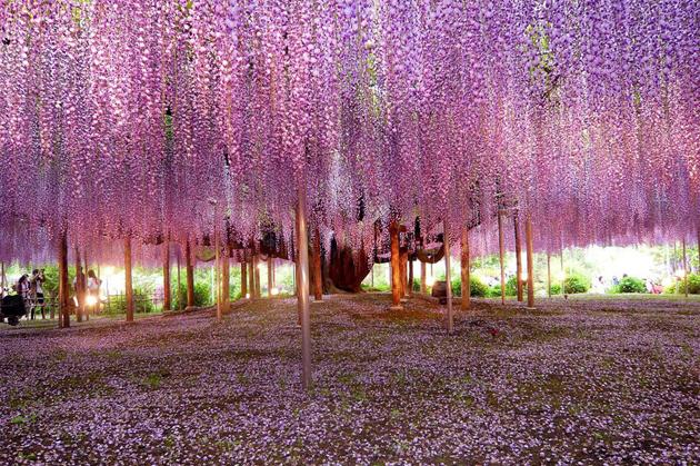 Beautiful Tree Photography (13)