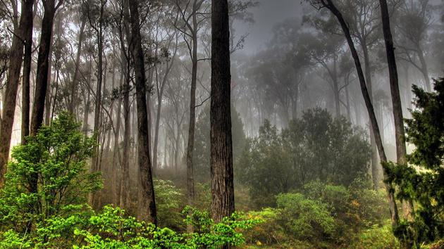Beautiful Tree Photography (14)