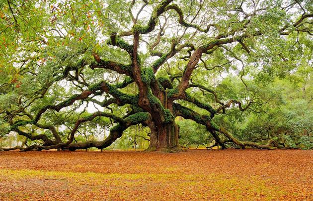 Beautiful Tree Photography