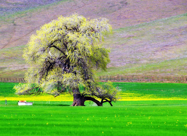 Beautiful Tree Photography (17)