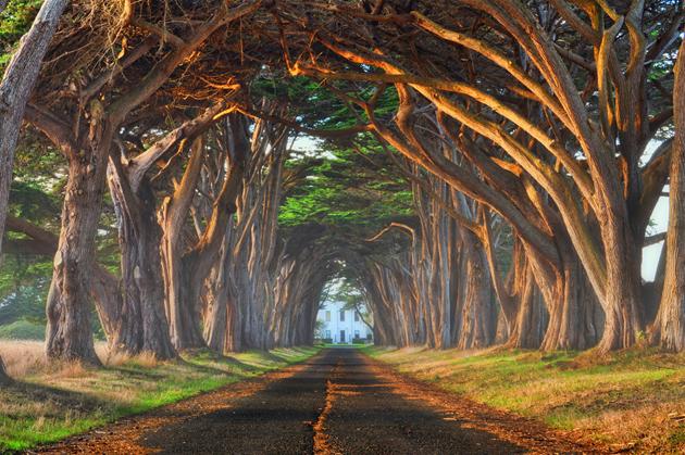 Beautiful Tree Photography (18)