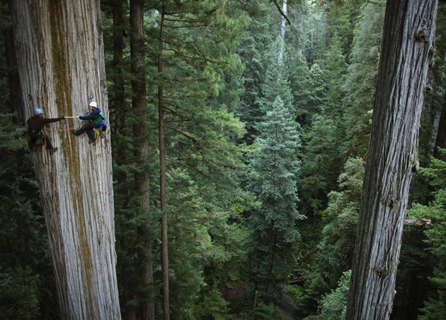 Beautiful Tree Photography (19)