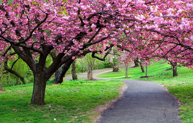 Beautiful Tree Photography (2)