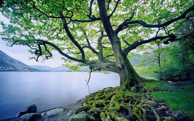 Beautiful Tree Photography (3)