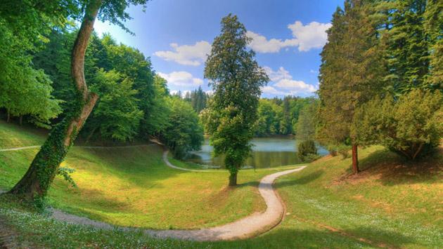 Beautiful Tree Photography (4)