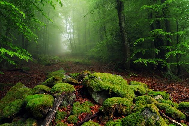 Beautiful Tree Photography (6)