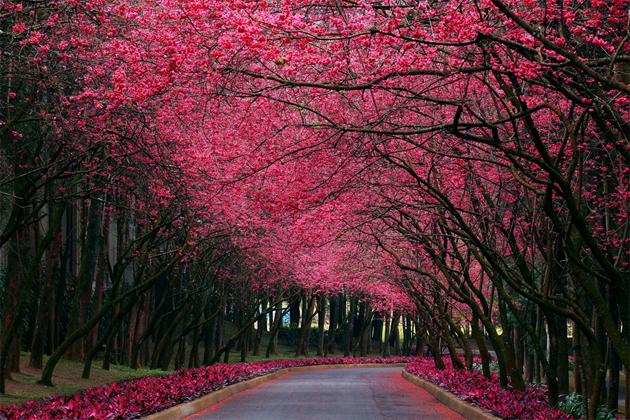 Beautiful Tree Photography (8)