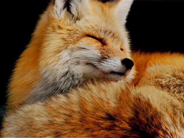 FoxWashington