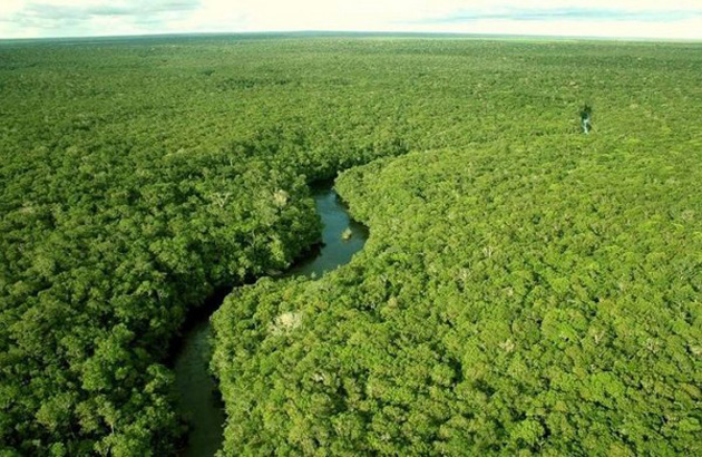 Trip to Amazon Forest (10)