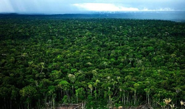 Trip to Amazon Forest (13)