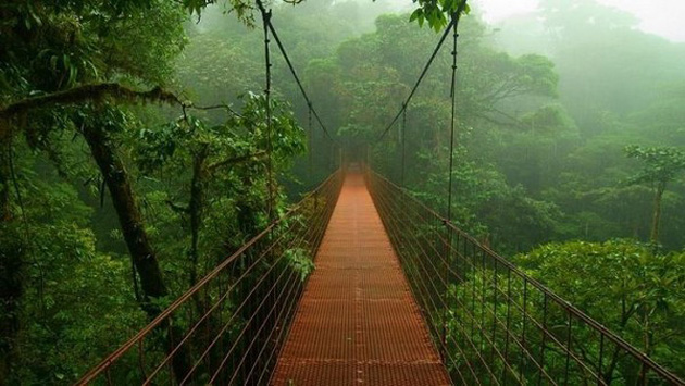 Trip to Amazon Forest (14)