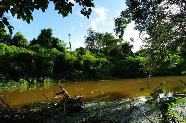 Trip to Amazon Forest (15)
