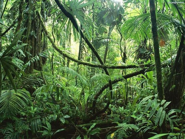Trip to Amazon Forest (18)