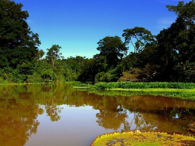 Trip to Amazon Forest (22)