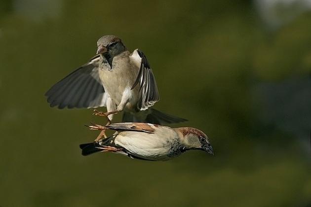 world of Beautiful Birds (1)