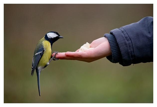 world of Beautiful Birds (10)