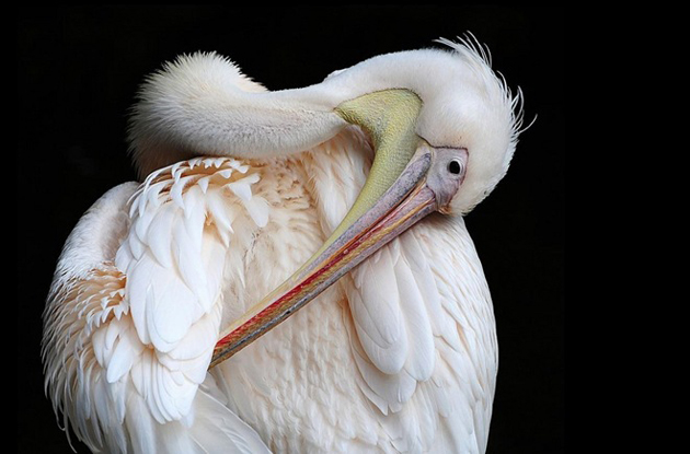 world of Beautiful Birds (20)