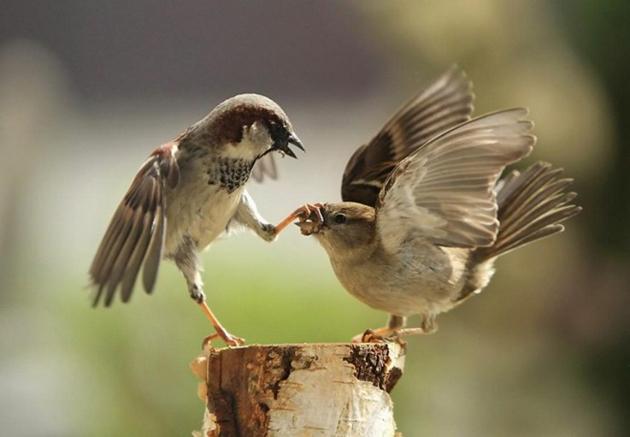 world of Beautiful Birds (24)
