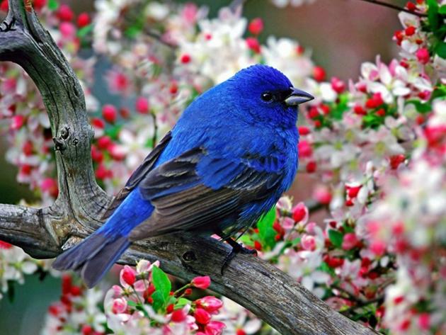 Европейски ден на птиците - 2 октомври