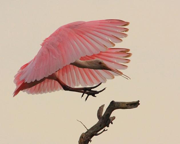 world of Beautiful Birds (33)