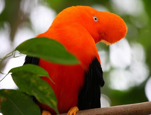 world of Beautiful Birds (4)