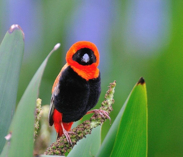world of Beautiful Birds (41)