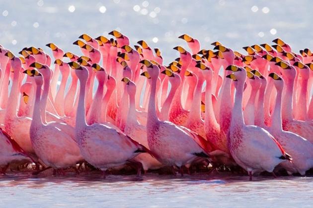 world of Beautiful Birds (45)