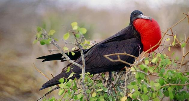 world of Beautiful Birds (5)