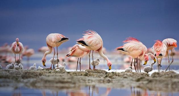 world of Beautiful Birds (6)