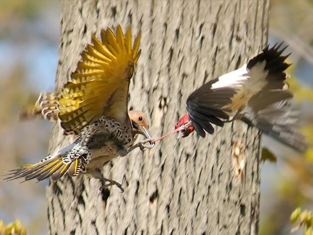 world of Beautiful Birds (7)
