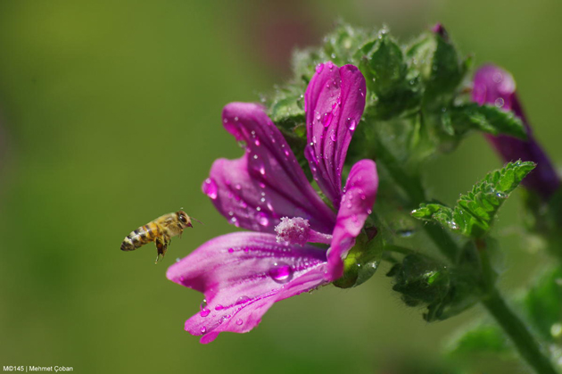 1001 flower honey by Mehmet Çoban
