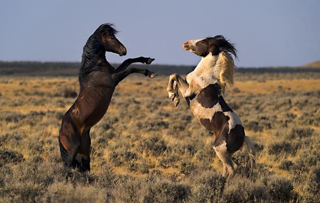 32 Beautiful Horse Photography (10)