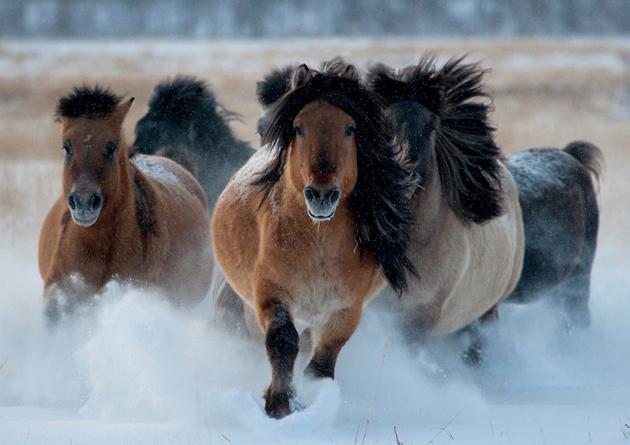 32 Beautiful Horse Photography (11)