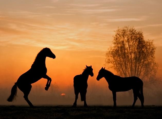 32 Beautiful Horse Photography (12)