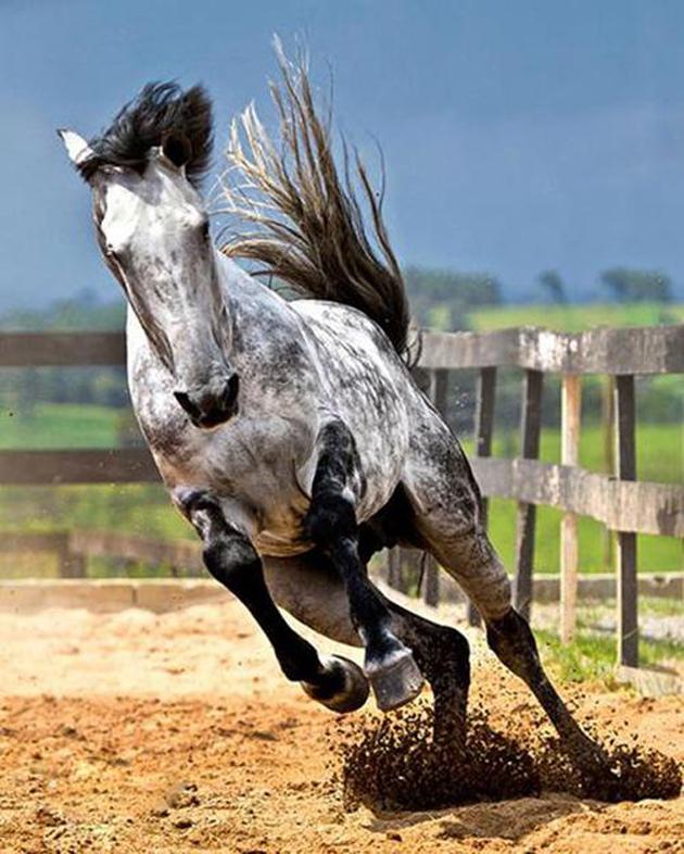 32 Beautiful Horse Photography (13)