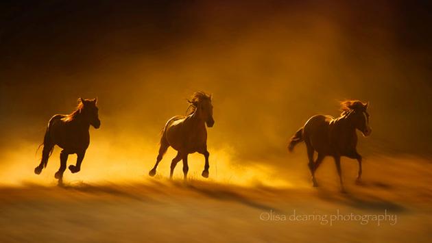 32 Beautiful Horse Photography (15)