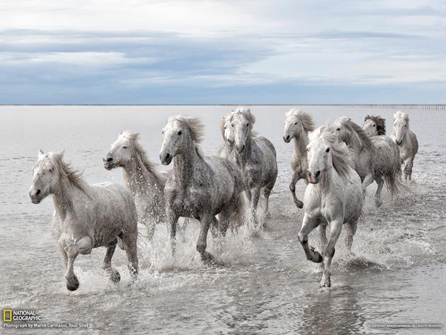 32 Beautiful Horse Photography (16)