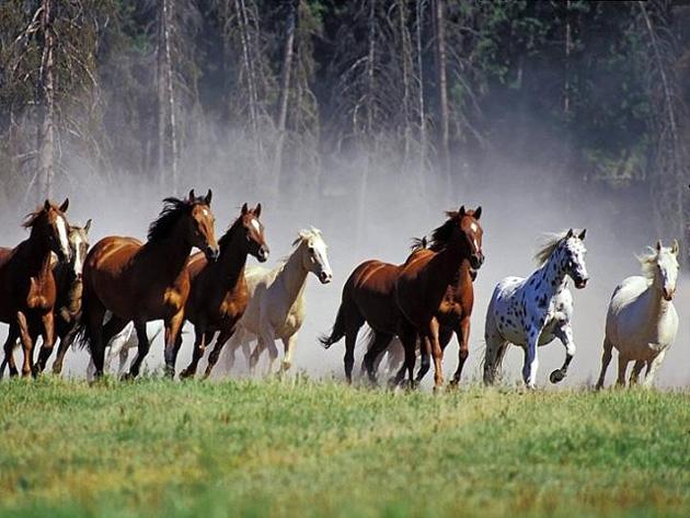 32 Beautiful Horse Photography (17)
