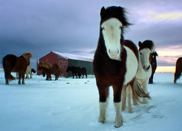 32 Beautiful Horse Photography (18)