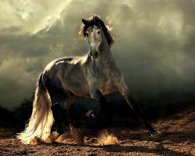 32 Beautiful Horse Photography (19)