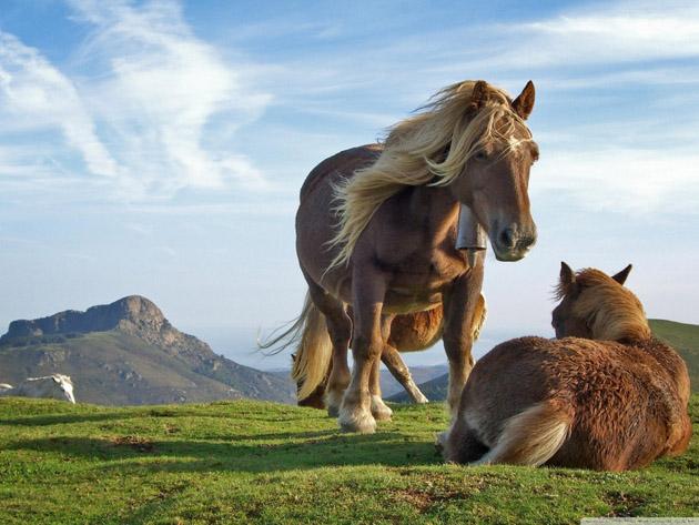 32 Beautiful Horse Photography (2)