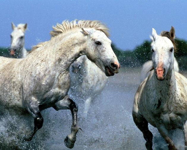 32 Beautiful Horse Photography (22)