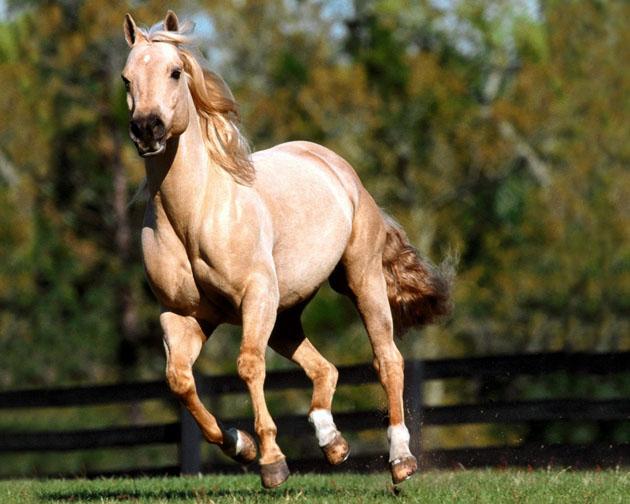 32 Beautiful Horse Photography (23)