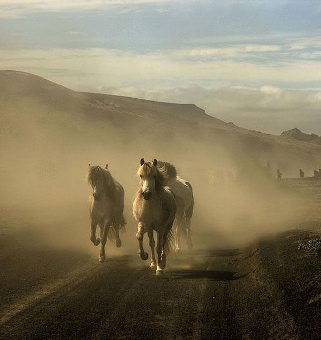 32 Beautiful Horse Photography (24)