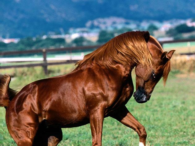 32 Beautiful Horse Photography (25)