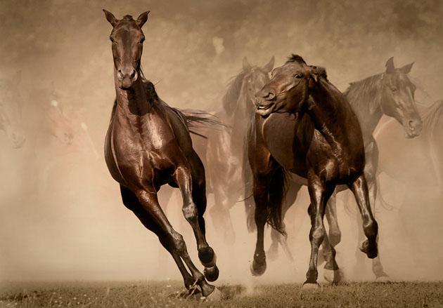 32 Beautiful Horse Photography (26)