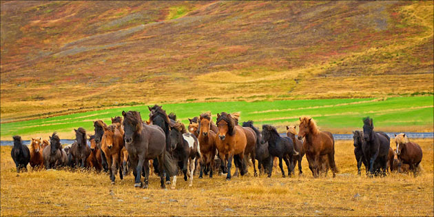 32 Beautiful Horse Photography (28)