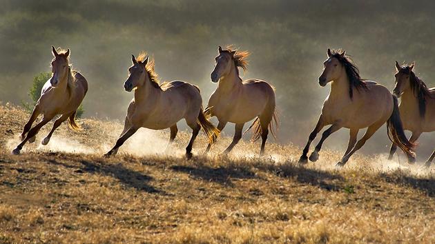 32 Beautiful Horse Photography (29)