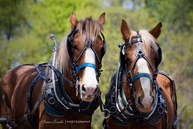 32 Beautiful Horse Photography (3)