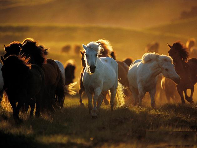 32 Beautiful Horse Photography (30)